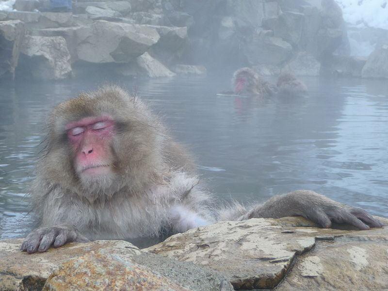 how to go to jigokudani monkey park from tokyo
